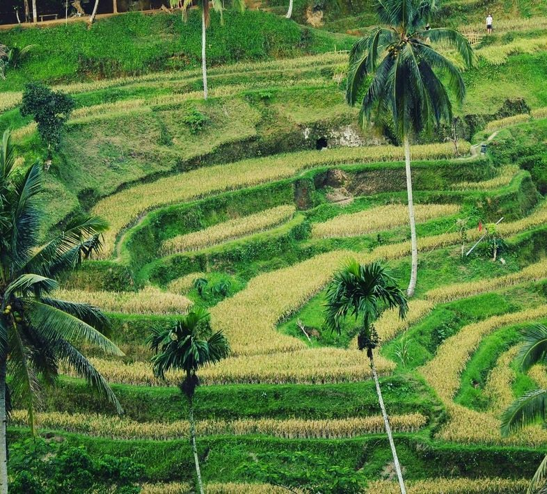 On the Bliss Sightseers Package indulge your sightseeing bliss with our personal driver to take you around and show you the highlights of Bali