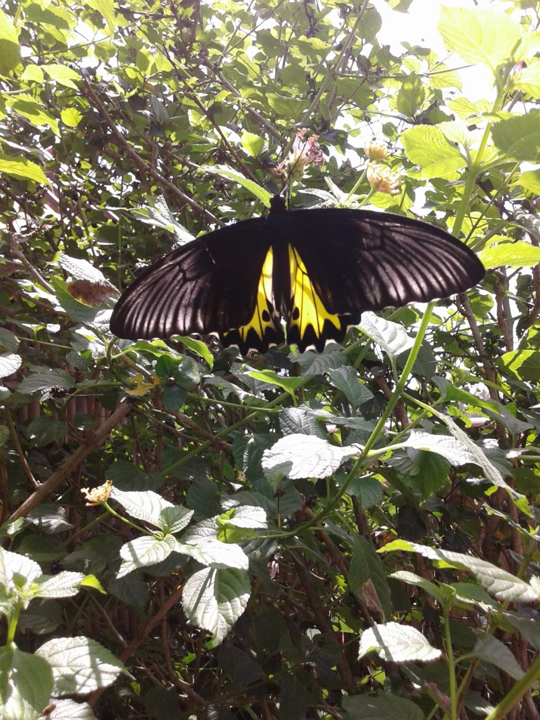 Butterfly House Asia's largest Butterfly Park… just beautiful!