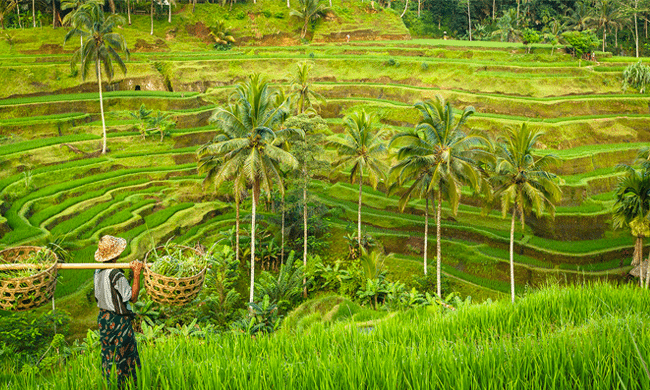 Find out about our exciting new retreat opening soon in Ubud!