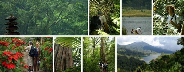 sightseeing in Bali, jungle trek, rainforest