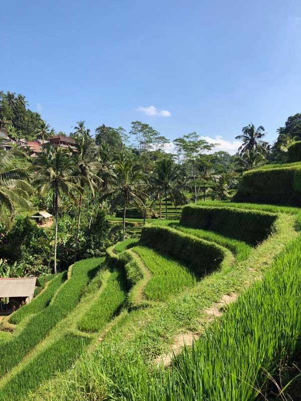 Tegalalang rice terreace Bali sightseeing