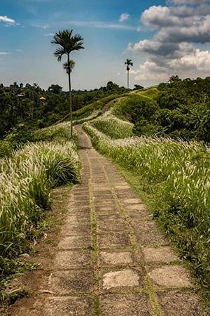 Campuhan Ridge Walk- Ubud Bali retreat