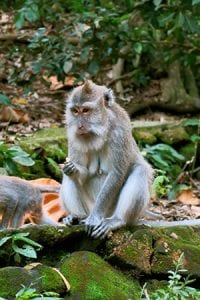 Monkey Forest - Ubud Bali retreat